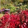 &lt;a href=&quot;http://www.twojogrod.com.pl/o-firmie/&quot;&gt;Twoje miejsce&lt;/a&gt;&lt;span&gt;<p>Rośliny posadzone jesienią będą cieszyć nas wiosną</p> &lt;/span&gt;
