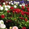 &lt;a href=&quot;http://www.twojogrod.com.pl/asortyment/&quot;&gt;Wiosenne kolory&lt;/a&gt;&lt;span&gt;<p>Natura nas rozpieszcza &#8211; jest co podziwiać</p> &lt;/span&gt;
