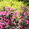 &lt;a href=&quot;http://www.twojogrod.com.pl/wiosenne-kolory/&quot;&gt;Letnie kolory&lt;/a&gt;&lt;span&gt;<p>Natura nas rozpieszcza – jest co podziwiać</p> &lt;/span&gt;