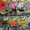 &lt;a href=&quot;http://www.twojogrod.com.pl/o-firmie/&quot;&gt;Twoje miejsce&lt;/a&gt;&lt;span&gt;<p>Rośliny posadzone wiosną będą cieszyć nas latem</p> &lt;/span&gt;