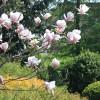 """<a href=""""http://www.twojogrod.com.pl/twoje-miejsce/"""">Narodziny wiosny</a><span></span>"""