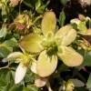 """<a href=""""http://www.twojogrod.com.pl/w-pelnym-sloncu/"""">Zwiastuny wiosny.</a><span></span>"""