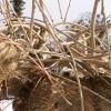 """<a href=""""http://www.twojogrod.com.pl/pod-blekitnym-niebem/"""">W zimowym klimacie.</a><span></span>"""