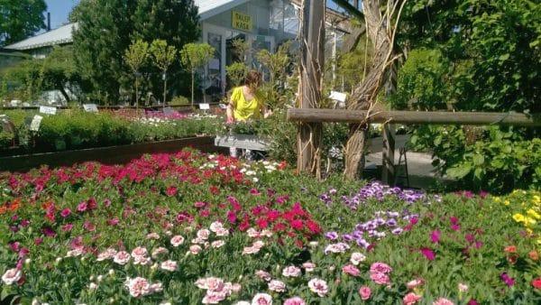 Twój Ogród